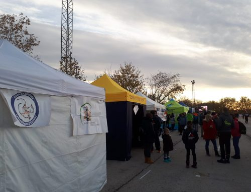 XXXVIII CROSS INTERNACIONAL DE LA CONSTITUCIÓN (ALCOBENDAS)
